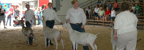 American Dairy Goat Show
